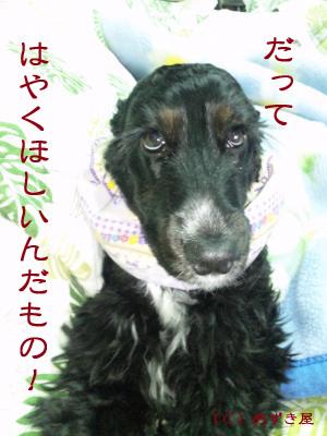 azuki259.jpg