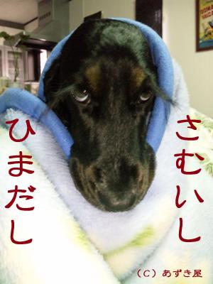 azuki301.jpg