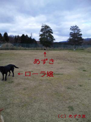 azuki318.jpg