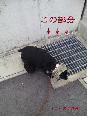 azuki324.jpg