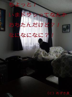 azuki334.jpg