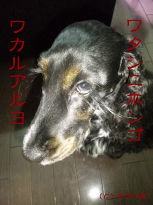 azuki373.jpg