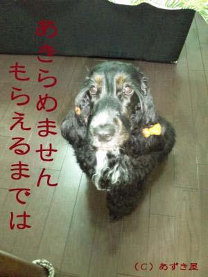 azuki955.jpg