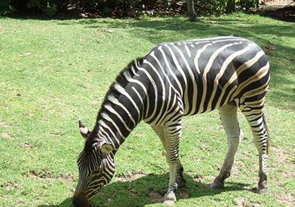 アデレード動物園3