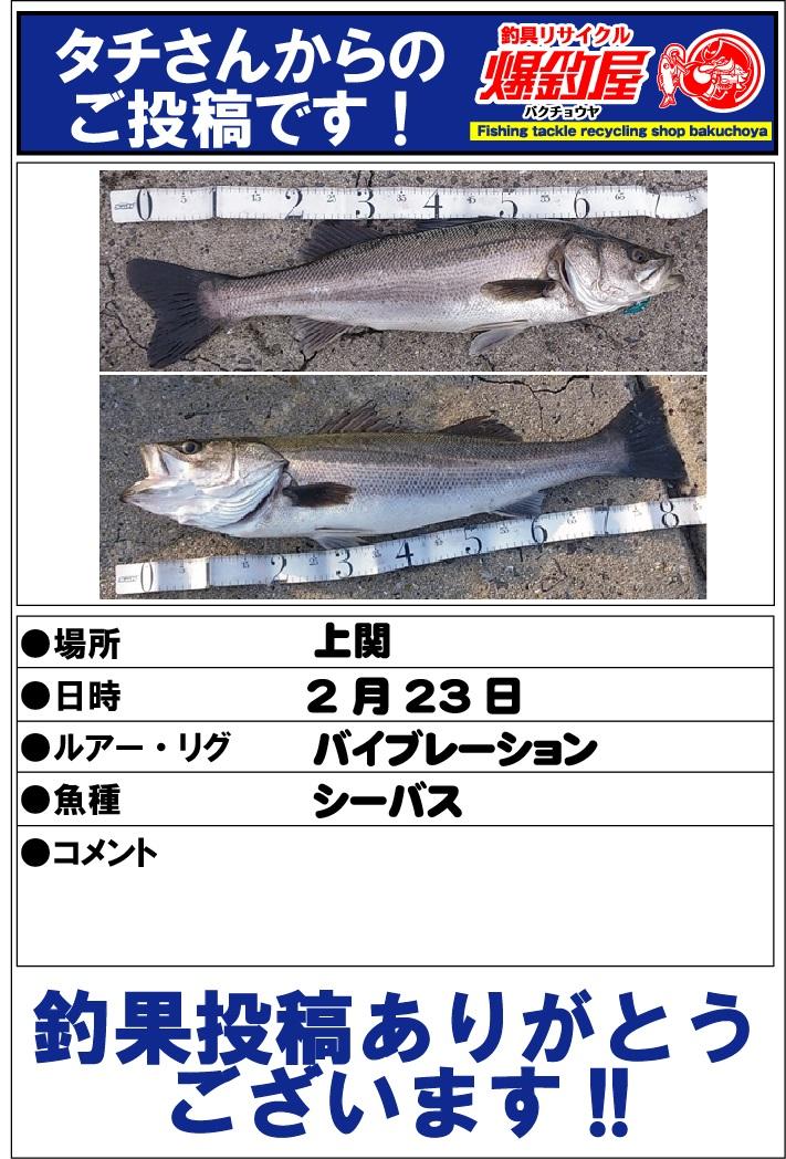 タチさん20130312