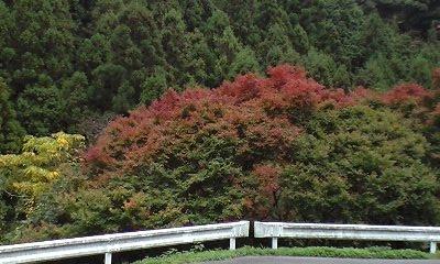 鈍川温泉 2