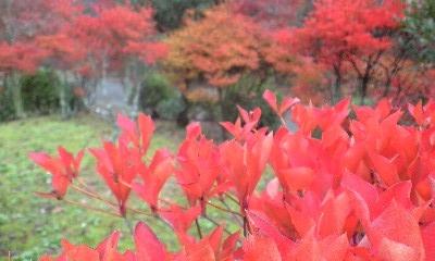 本谷公園 9
