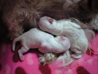 リリ baby 2
