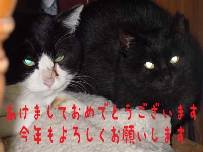11_0101_2.jpg