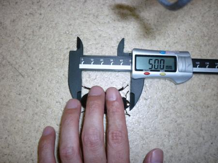 P1000844_convert_20110513003250.jpg