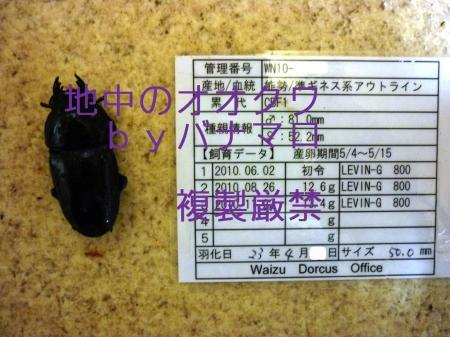 P1010355_convert_20120211231847.jpg