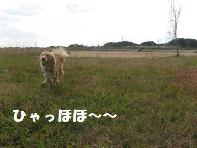 走る_convert_20091225160627