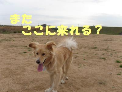 うひゃ_convert_20091225160321