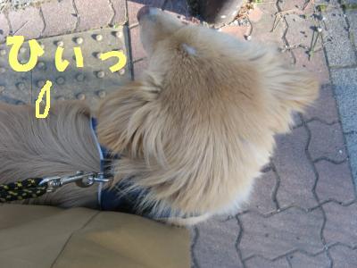 ひぃ_convert_20100123163234