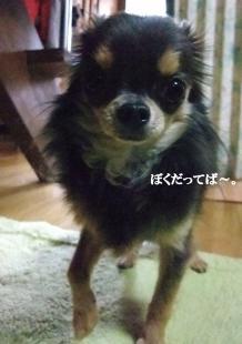 コピー ~ DSCF3330