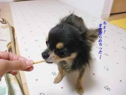 コピー ~ DSCF4650