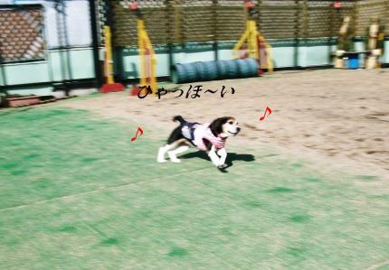 コピー ~ DSCF4660