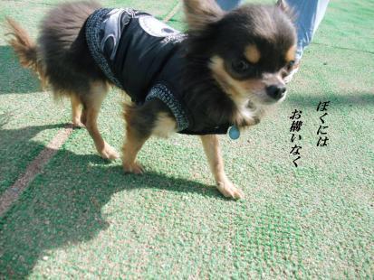 コピー ~ DSCF4685