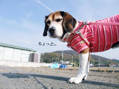 コピー ~ DSCF4758