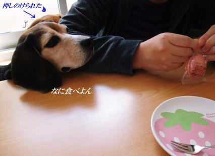 コピー ~ DSCF5224