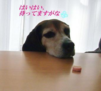 コピー ~ DSCF9403