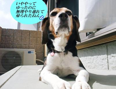 コピー (2) ~ DSCF9498