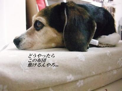 コピー ~ DSCF9235