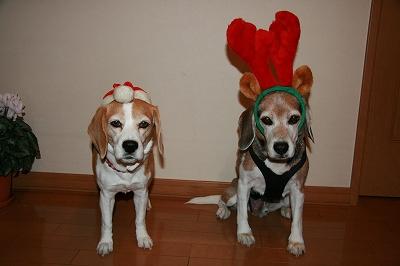 2010 クリスマス