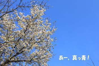 20100425_1.jpg