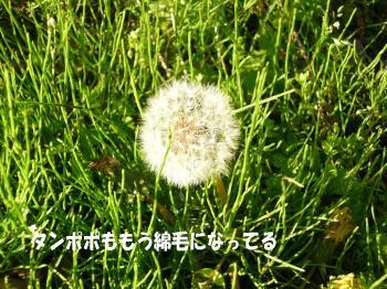 20100425_6.jpg