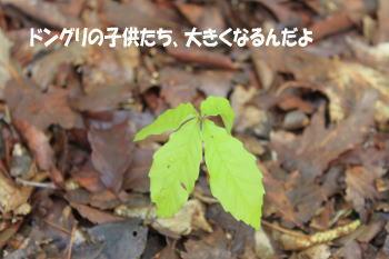 20100425_9.jpg