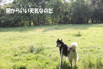 20100509_1.jpg