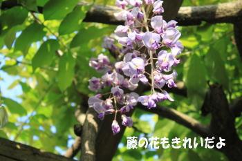 20100509_2.jpg