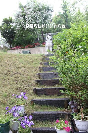 20100522_2.jpg
