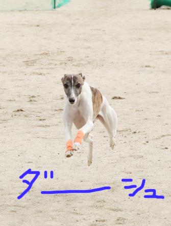 走るニッパー