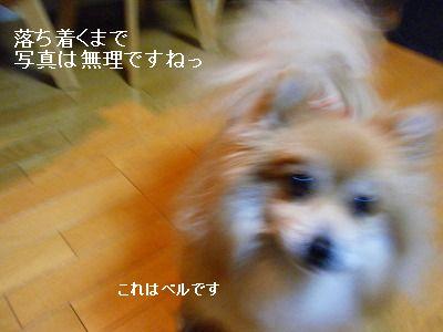 s-2010_0119トール作品倉庫0016