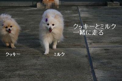 s-IMG_6811.jpg