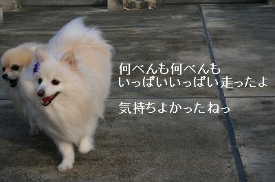 s-IMG_6812.jpg
