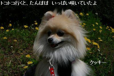 s-IMG_6951.jpg