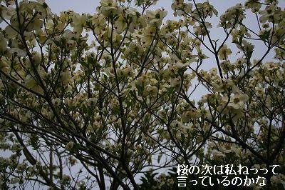 s-IMG_7016.jpg