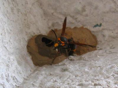 ドロ蜂 (6)