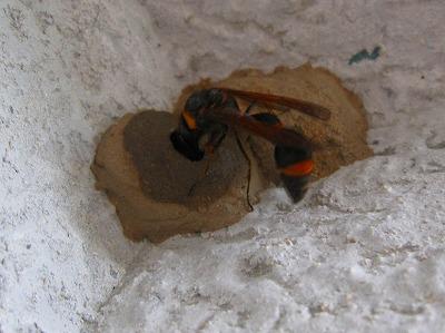 ドロ蜂 (2)