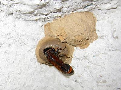 ドロ蜂 (4)