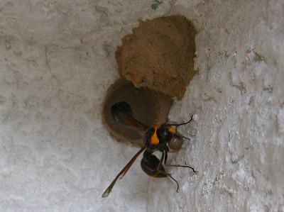 ドロ蜂 (7)