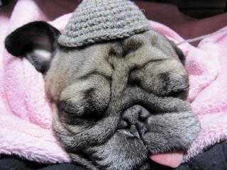おやじ帽で寝る