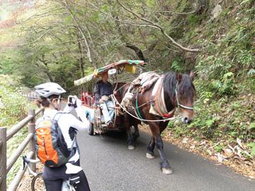 昇仙峡紅葉サイクリング16
