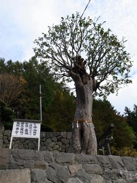 昇仙峡紅葉サイクリング43