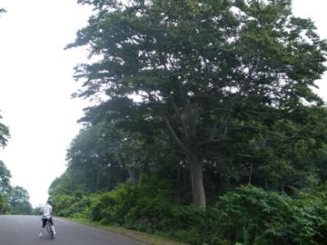 奥志賀林道&関田峠サイクリング(その3)34