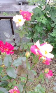 moblog_6f704afb.jpg