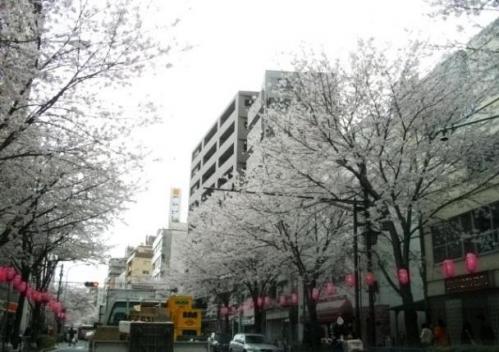 2010花見